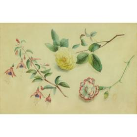 Yellow Rose, Fuchsia and Wine and White Carnation