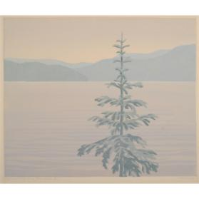SPRUCE TREE ON A GREY DAY