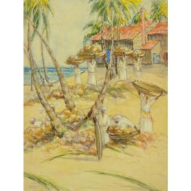 HARVESTING COCONUTS - JAMAICA, BRITISH WEST INDIES
