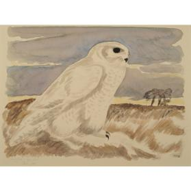 SNOWY OWL IN OPEN FIELDS