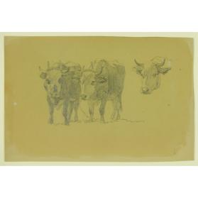STUDY OF OXEN IN YOKE