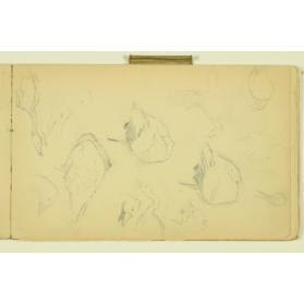 PAUL PEEL SKETCHBOOK: STUDIES OF GEESE