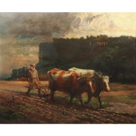 Oxen Ploughing